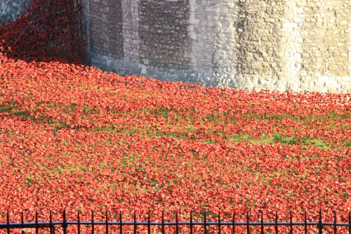 Some of the poppies that make up the display at the Tower of London.